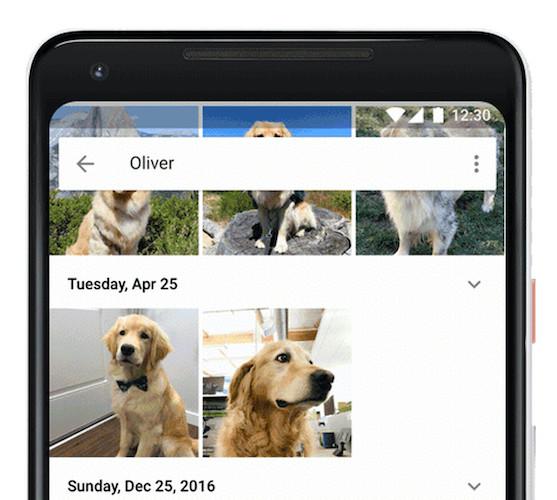 google photos หารูป น้อง หมา